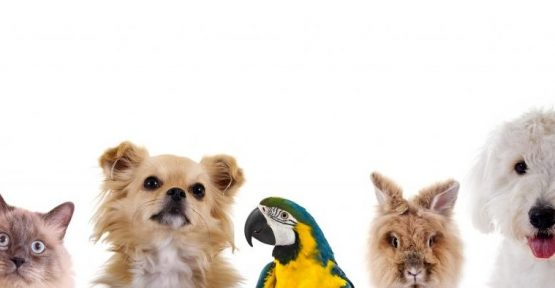 Pet Approvals – Is it Better to Seek Forgiveness than Ask Permission?